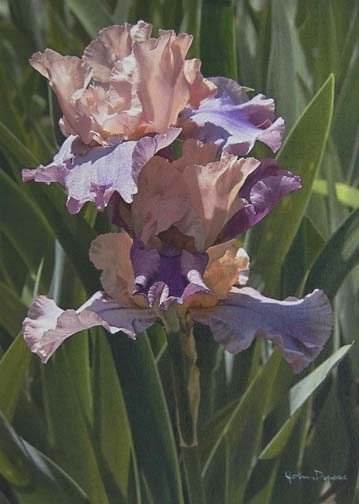 Iris II sold at componere gallery